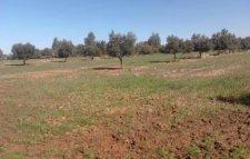 terrain titré a vendre a 24km de marrakech route ait ourir