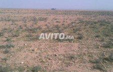 agricole grande terrain titre 20 HECTAR a tiznit